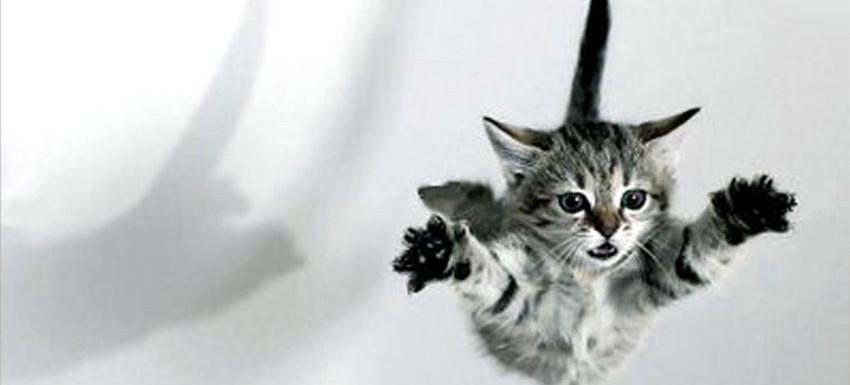 maček-in-druge-tegobe